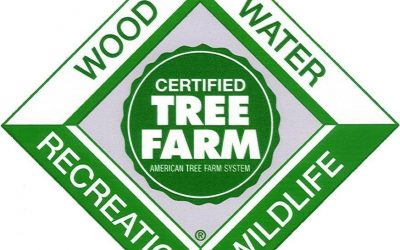 Tree Farm Scholarship Application Available Now!